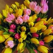 Тюльпаны к 8 марта 2020 от производителя.более 30 сортов