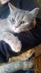 Пристрой котят