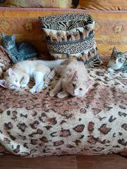 Котята,  4-5 месяцев. В добрые руки